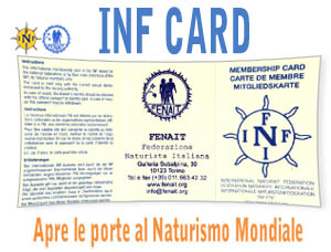 inf card